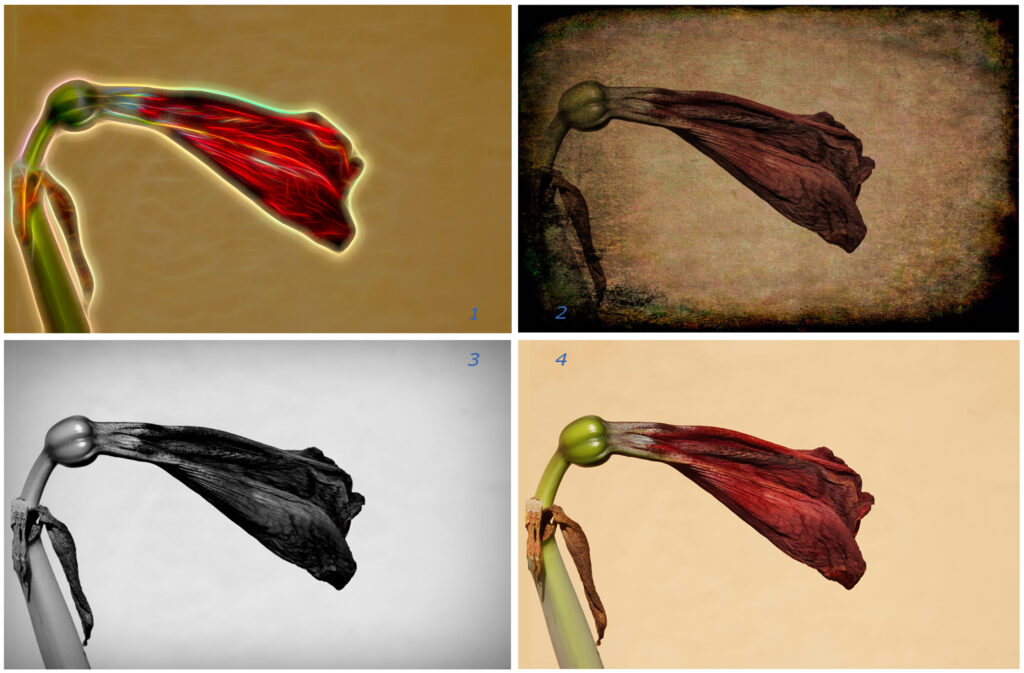 Four views of a flower