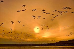Flyout • © Michael Dooley